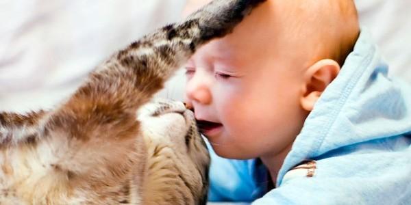 токсоплазмоз, токсокароз у детей