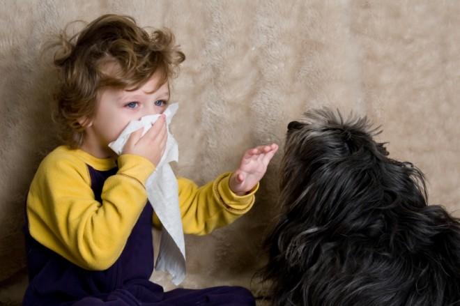 как проявляется аллергия на кошек и собак