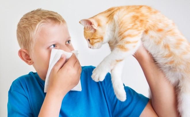 allergiya-na-koshek