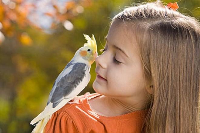как проявляется аллергия на животных
