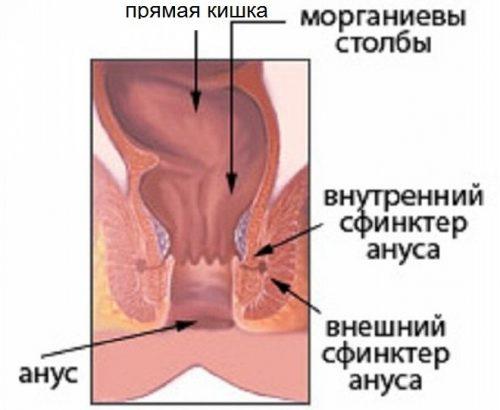 женский сфинктер фото