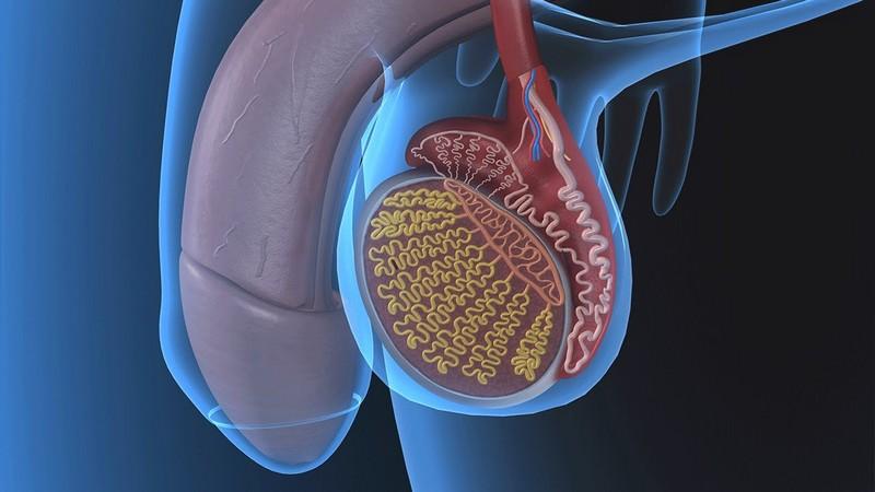гипоплазия яичка у ребенка