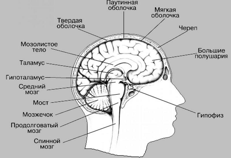 кровоизлияние в мозг у новорожденных причины