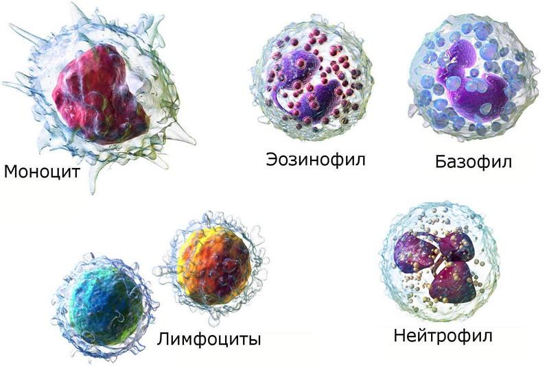 Лейкоз анализ крови цифры